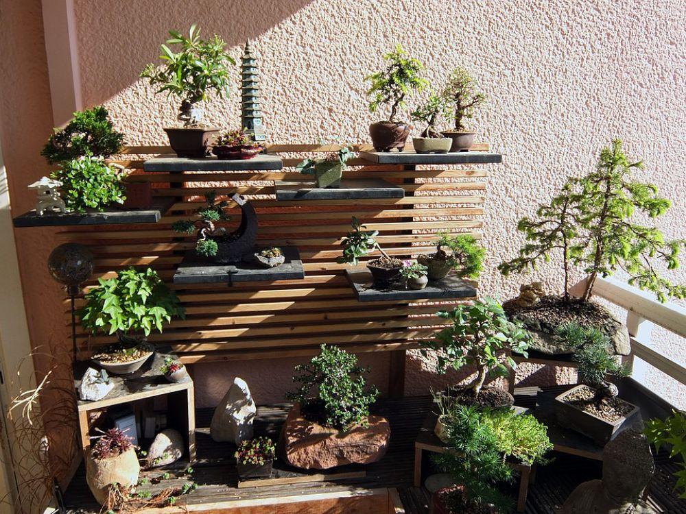 duvidas-sobre-como-cuidar-de-um-bonsai-tire-aqui.jpeg