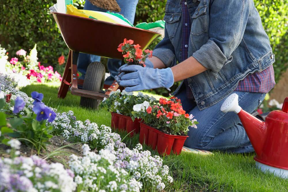 cuidando de um canteiro de flores