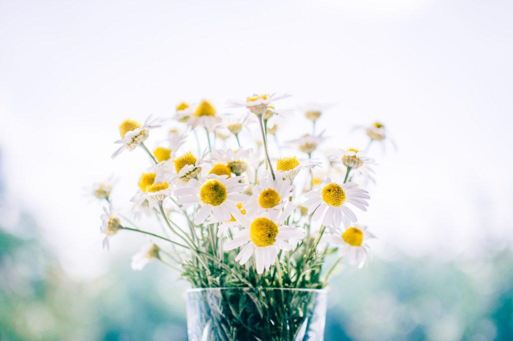 significado das flores margarida