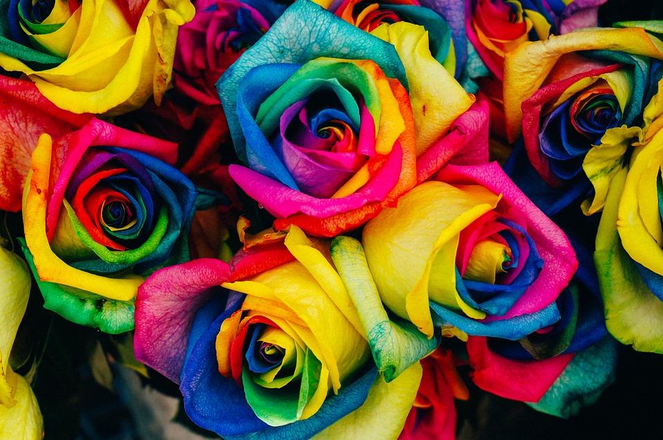 flores mais raras do mundo rosa arco iris