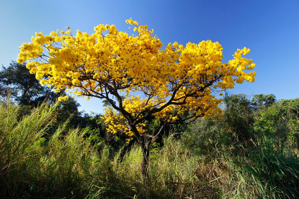 árvores que dão flores