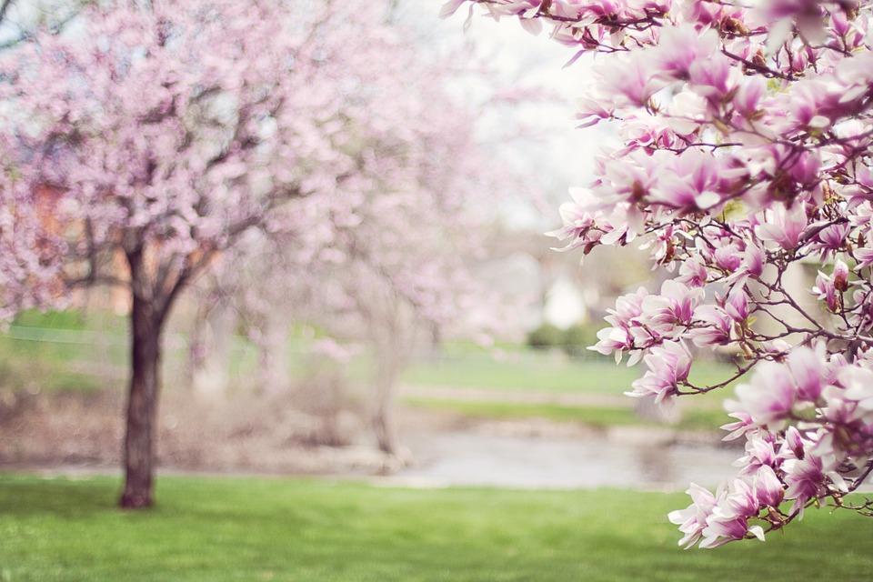 árvores e flores