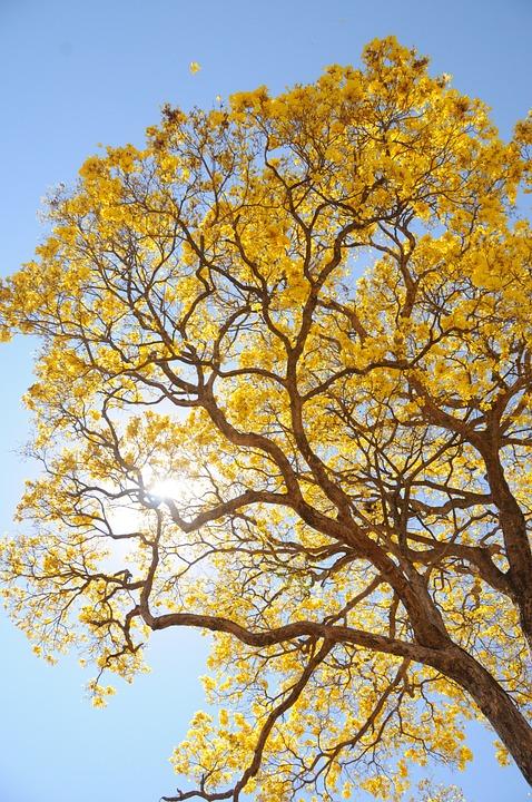 flores nas árvores