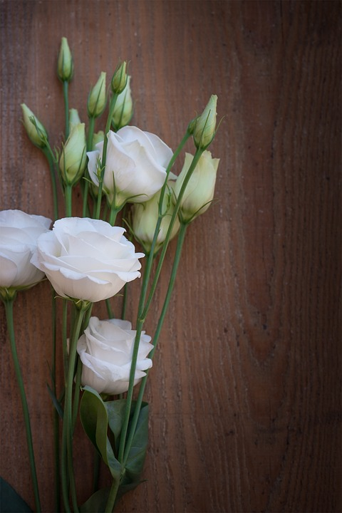 significado das flores lisianthus