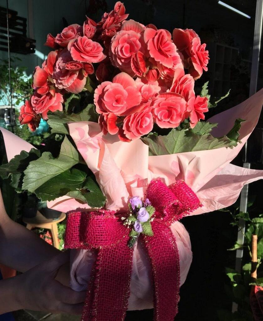 tipos de begônia ikebana flores