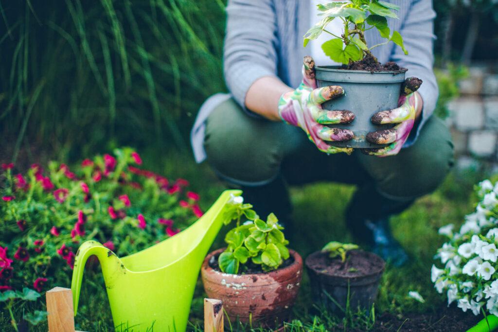 produtos para jardinagem