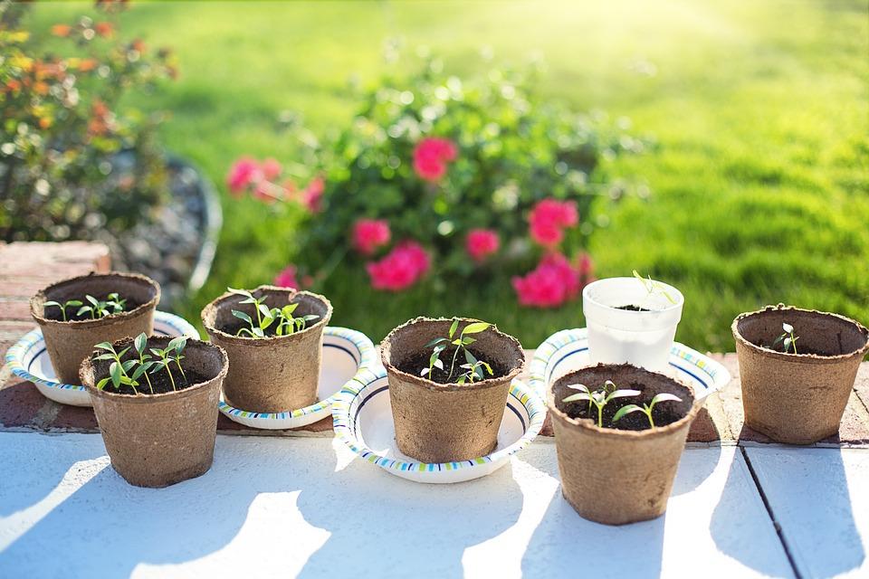 vasos para arranjos de flores em casa