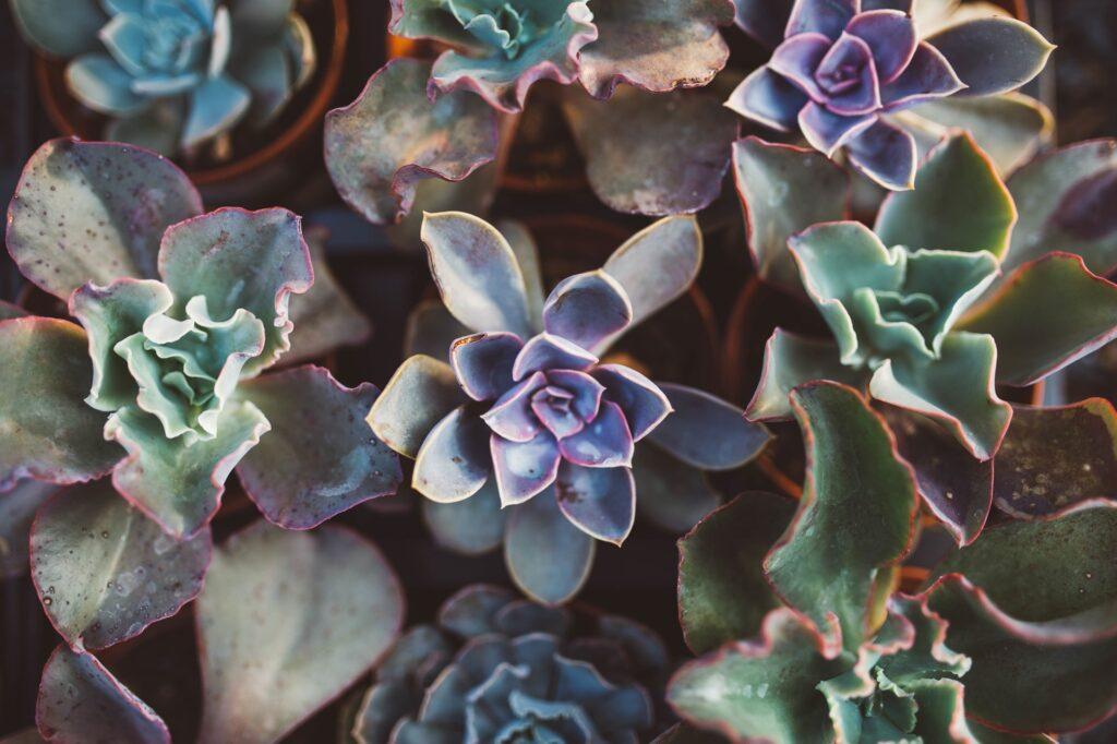 flores fáceis de cuidar