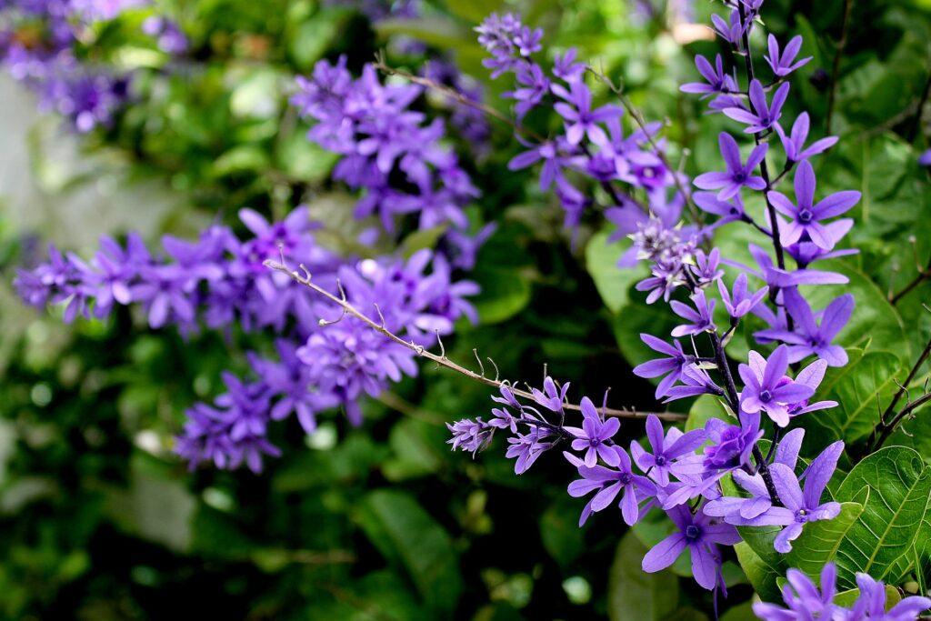 violeta para casa