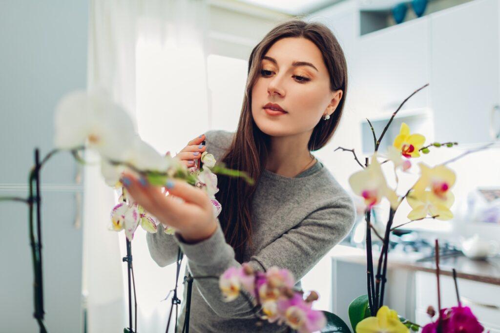 floricultura em bh