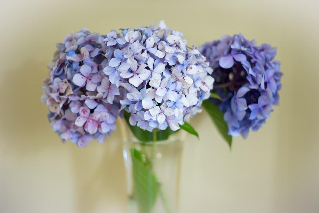 amizade e flores