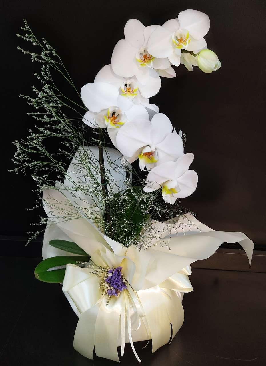orquídea em BH