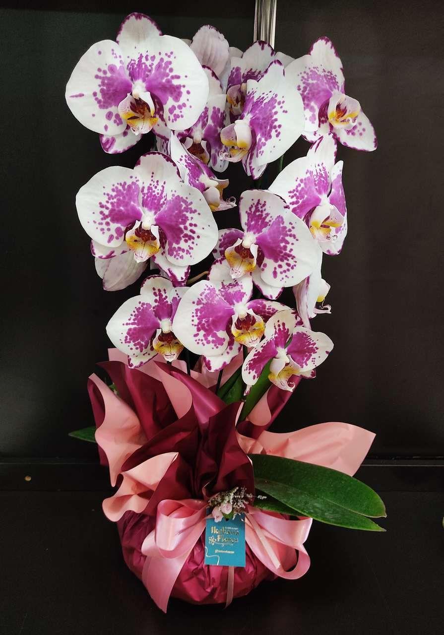 Orquídea Mosaico