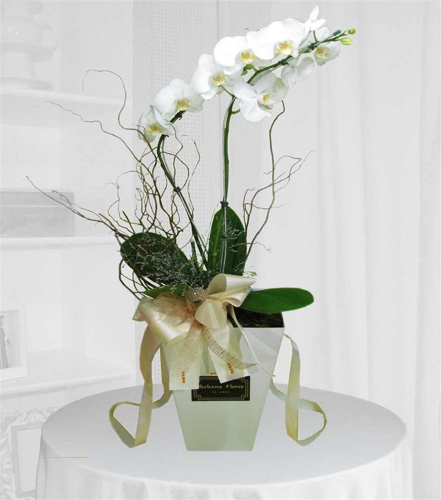 Orquídea Phalaenopsis cachepot branco
