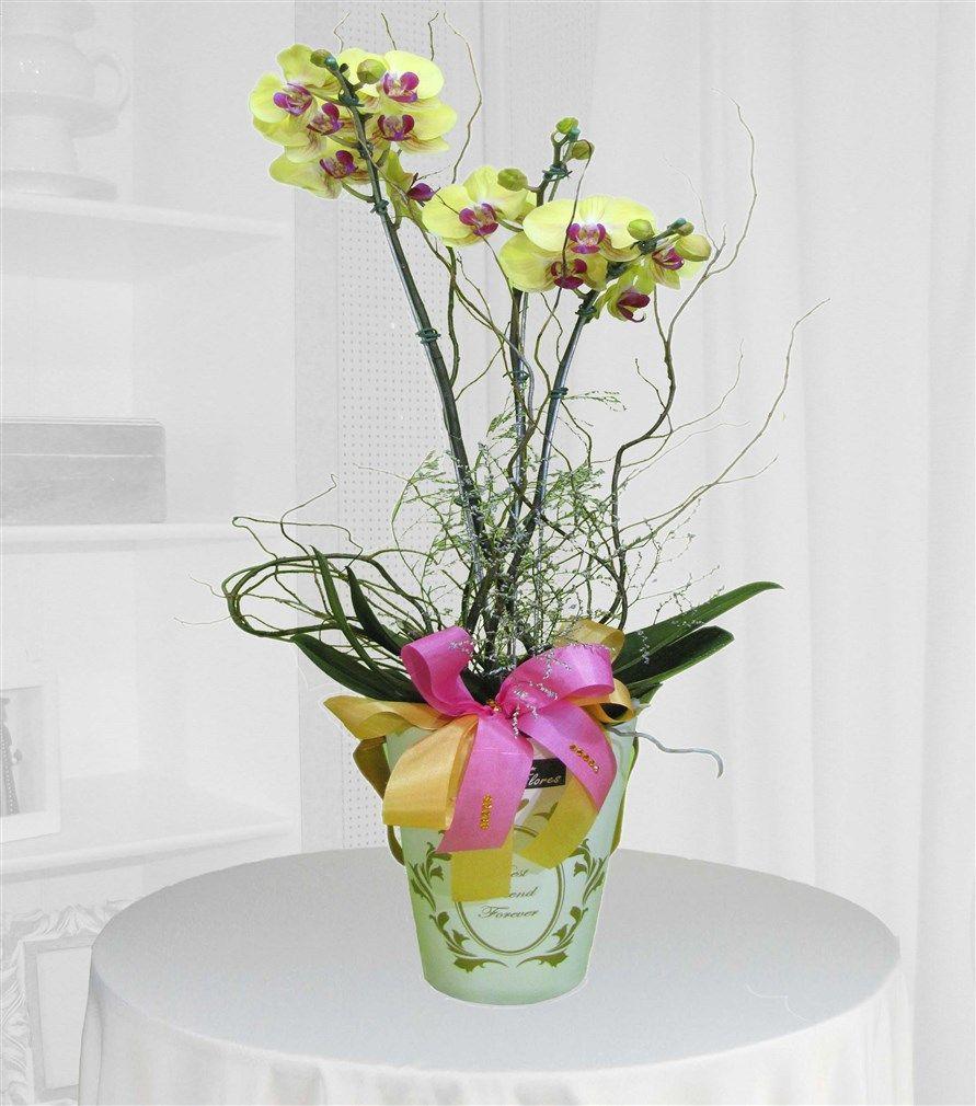 Orquídea Phalaenopsis creme no cachepot branco