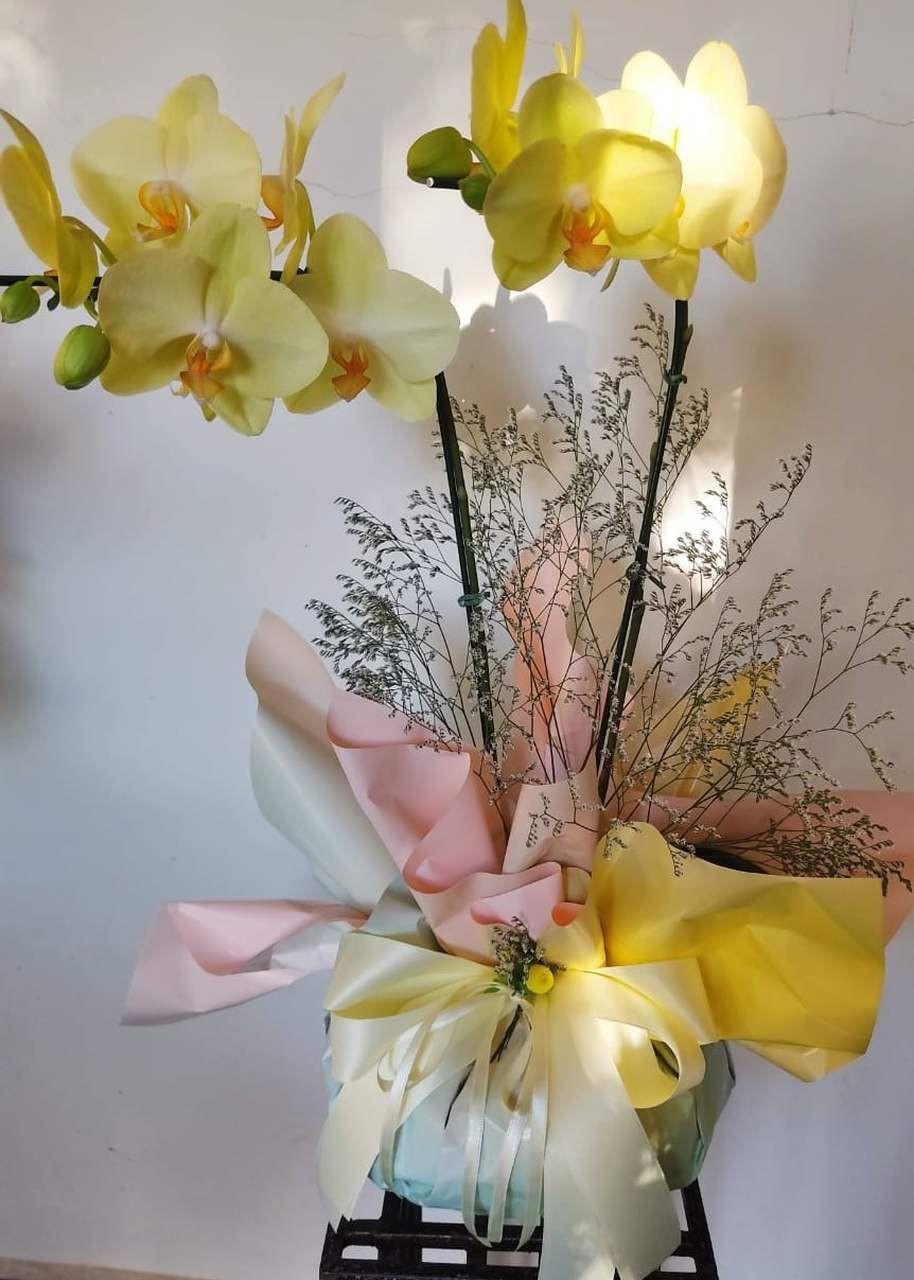 Orquídea Tie Dye