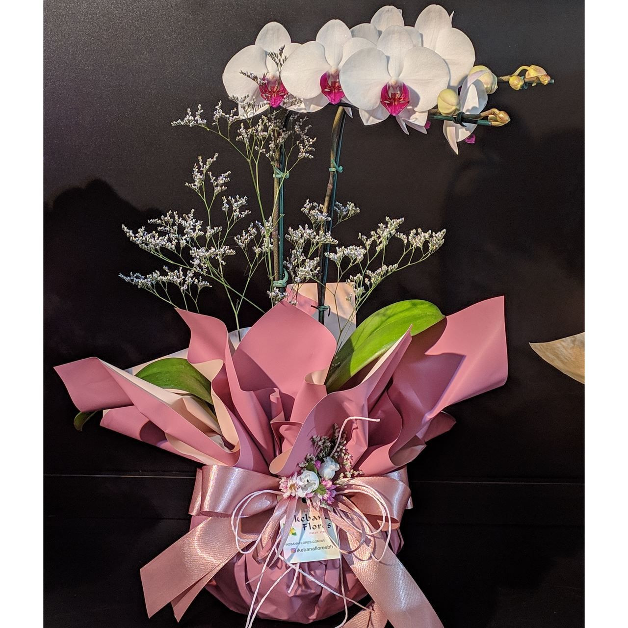 Orquídea Phalis miolo Roxo