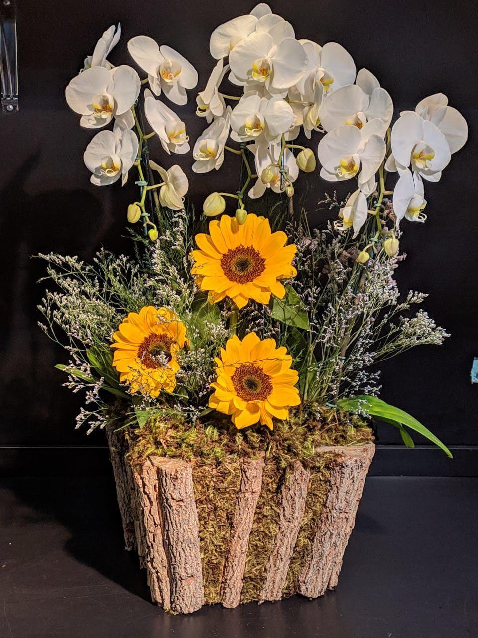 Orquídeas Premium