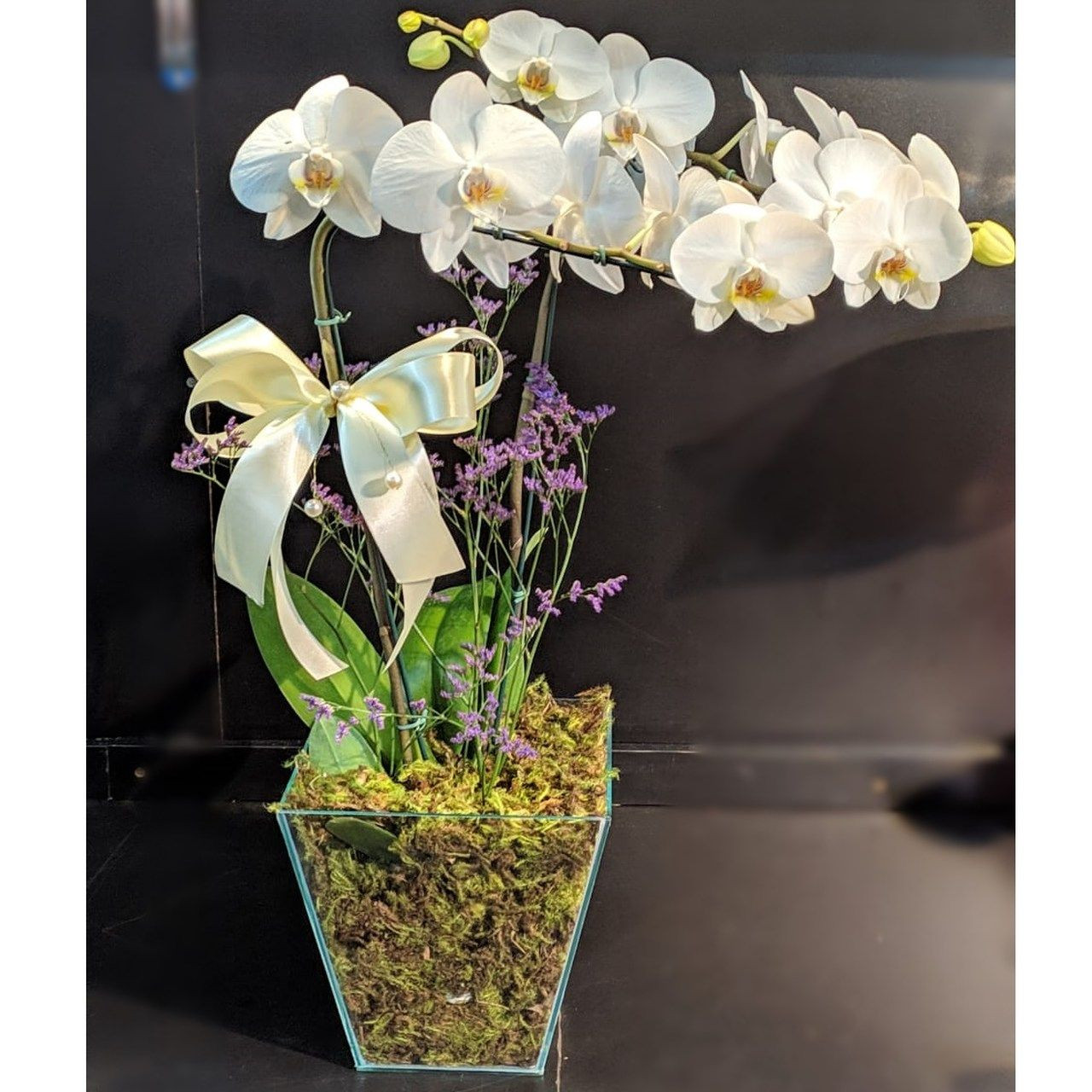 Orquídea Phalaenopsis Vidro