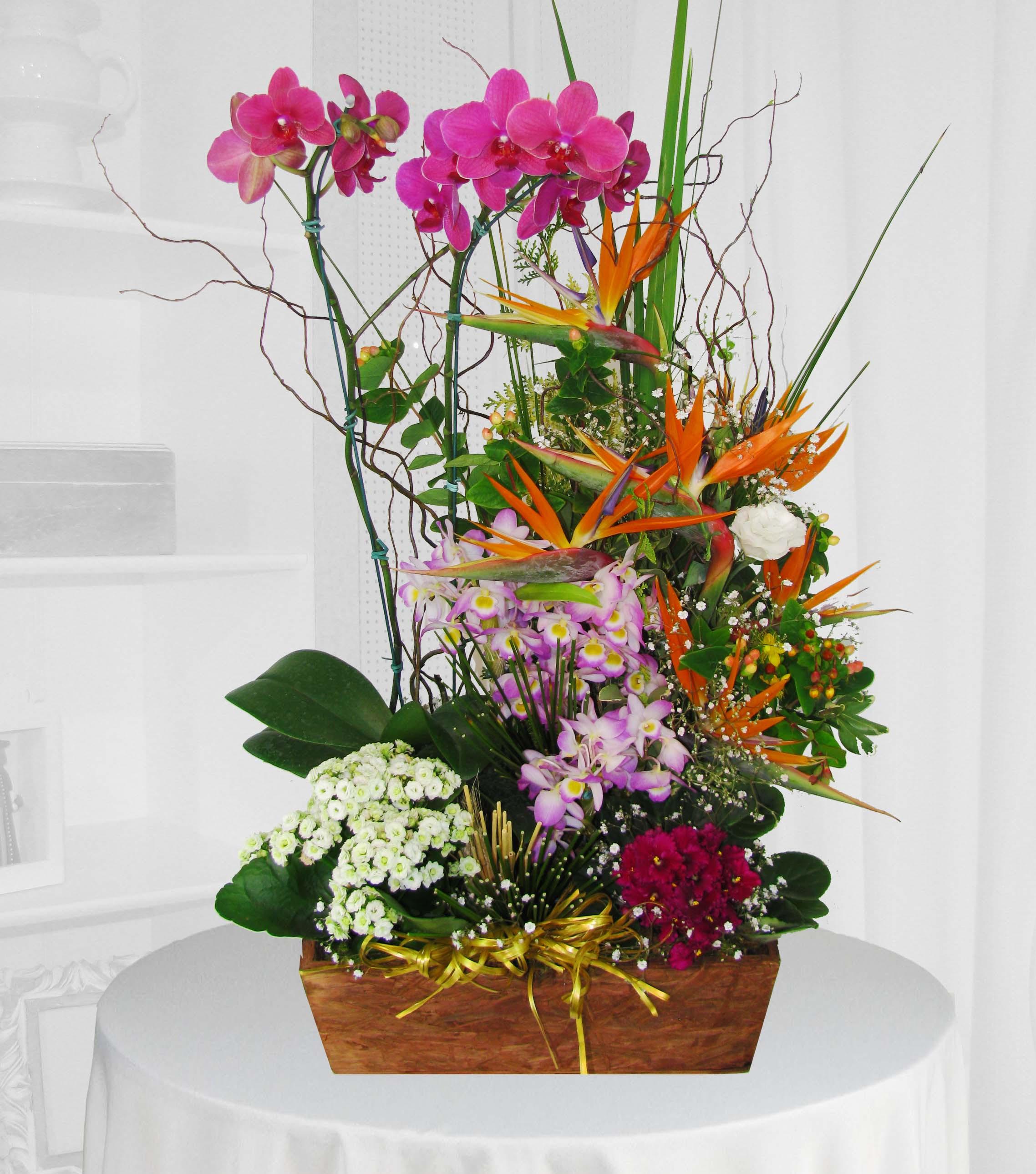 arranjo duas orquídeas