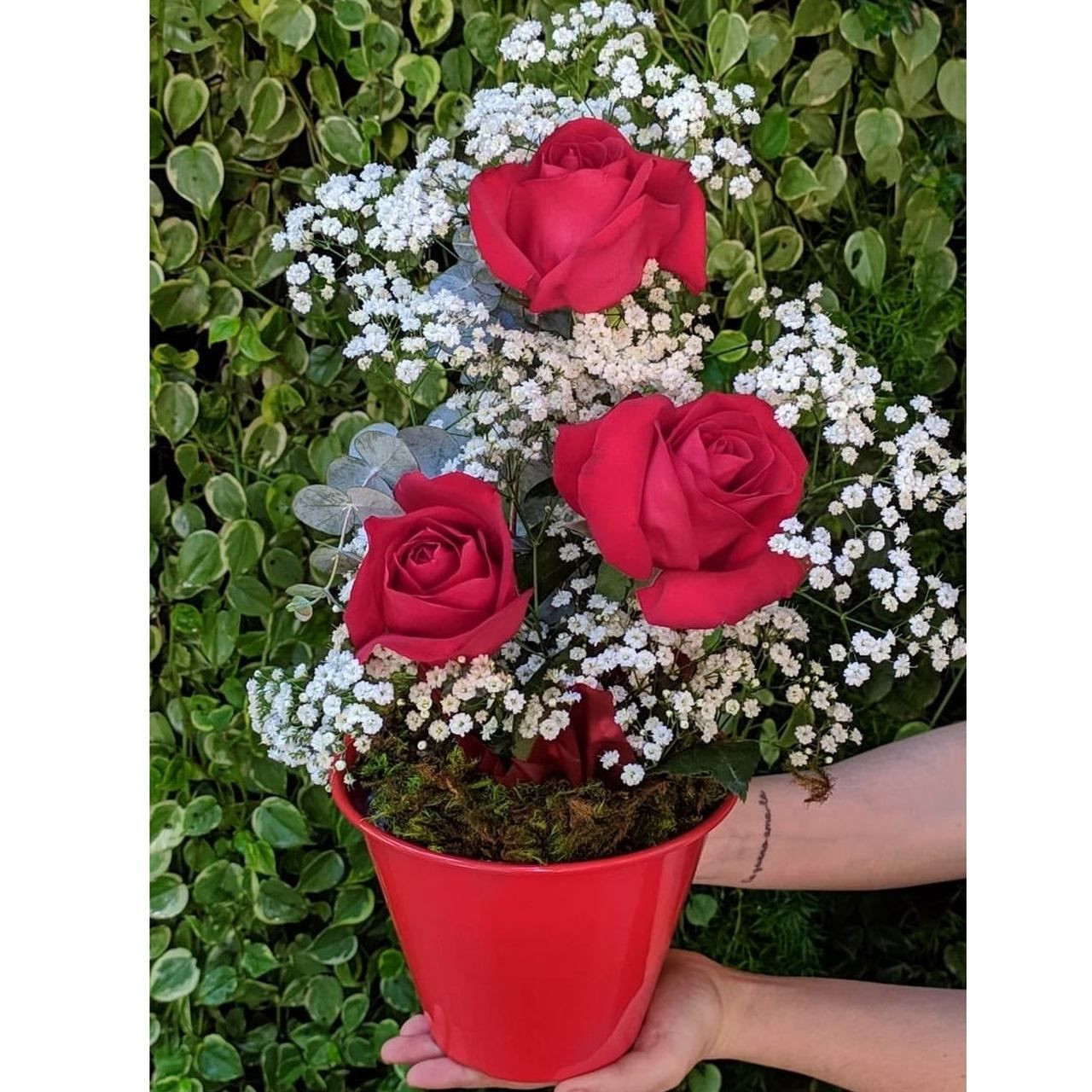 Balde de Rosas