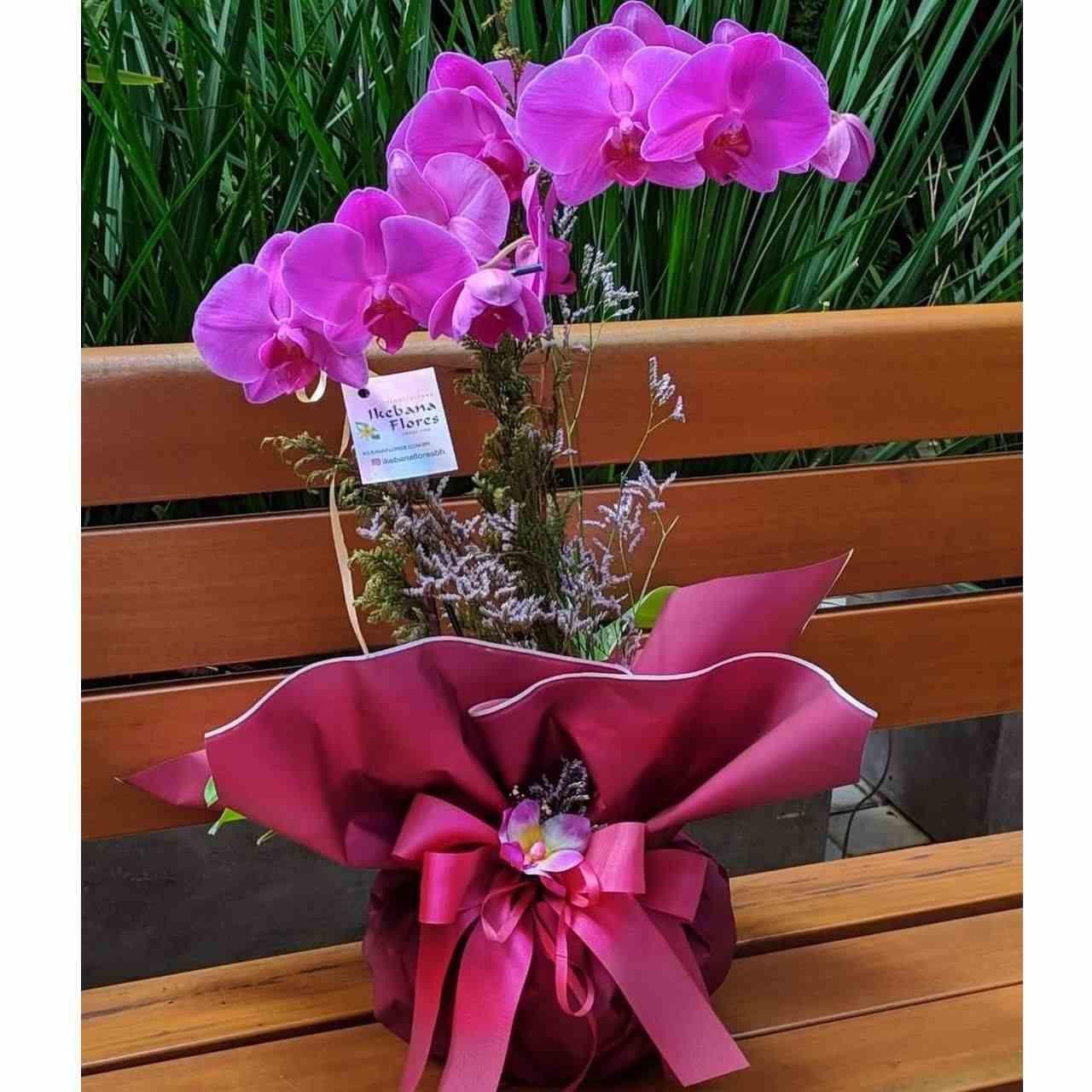 Orquídea Phalis Roxa
