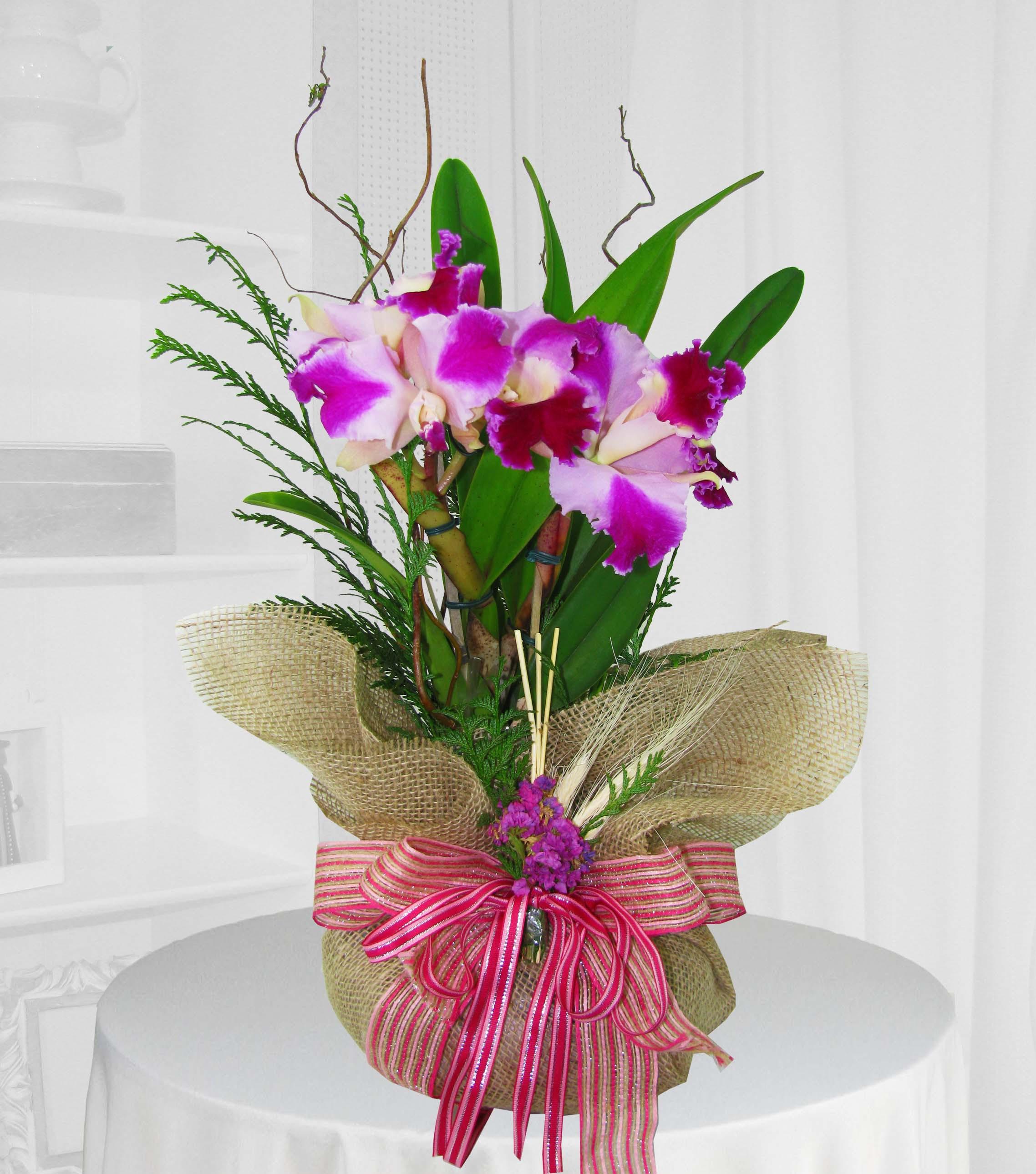 Orquídea cattleya na Juta - entrega para todo Brasil