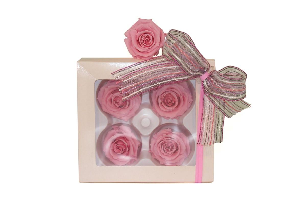 Quatro rosas cor rosa preservadas BH MG
