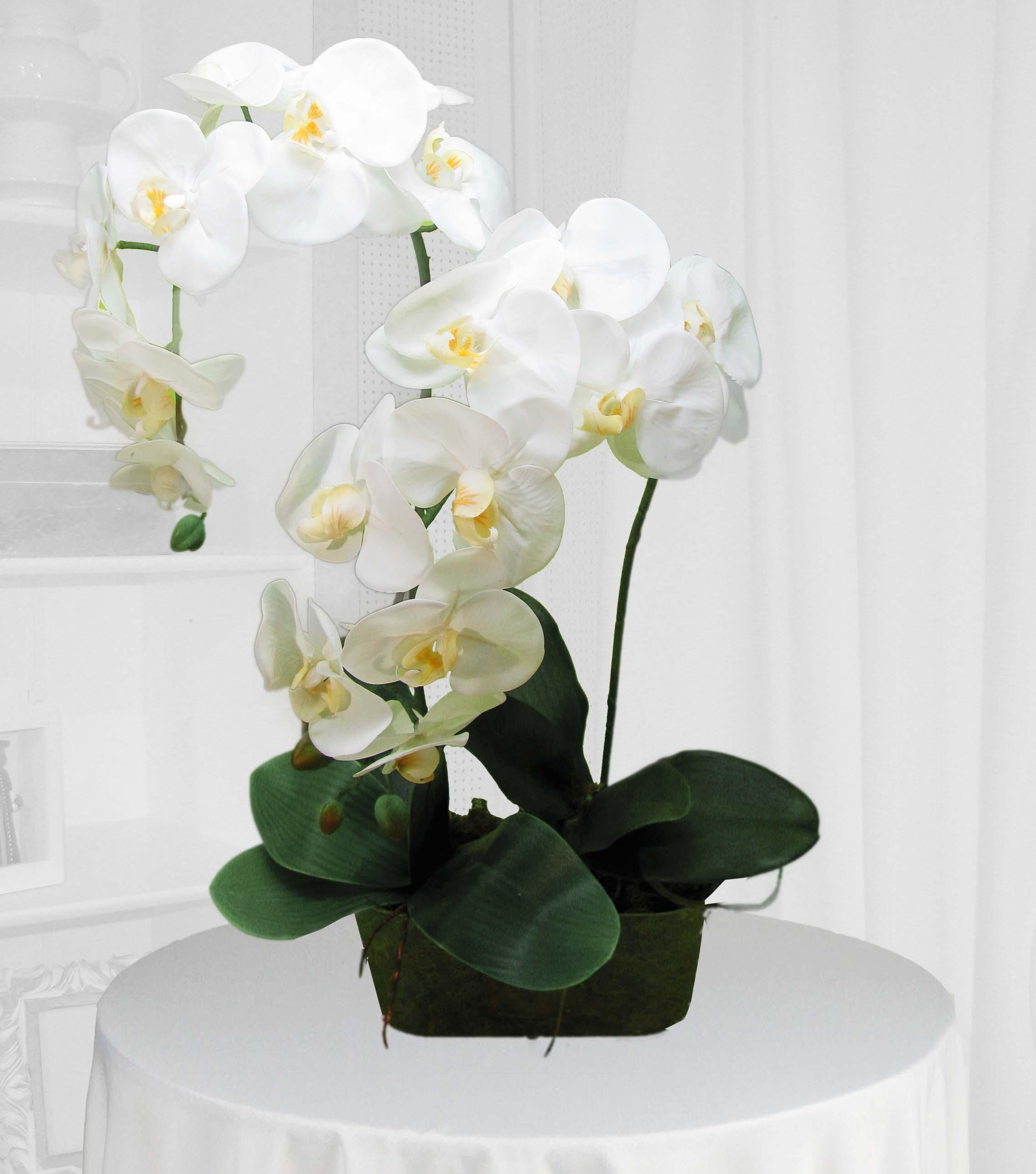 orquídea presente