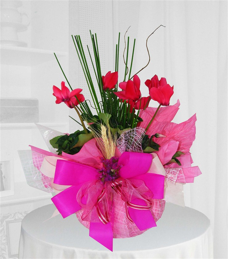 linda flor ciclame
