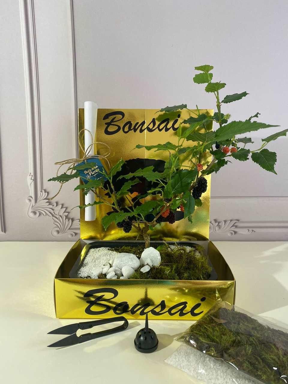 Kit bonsai de Amora