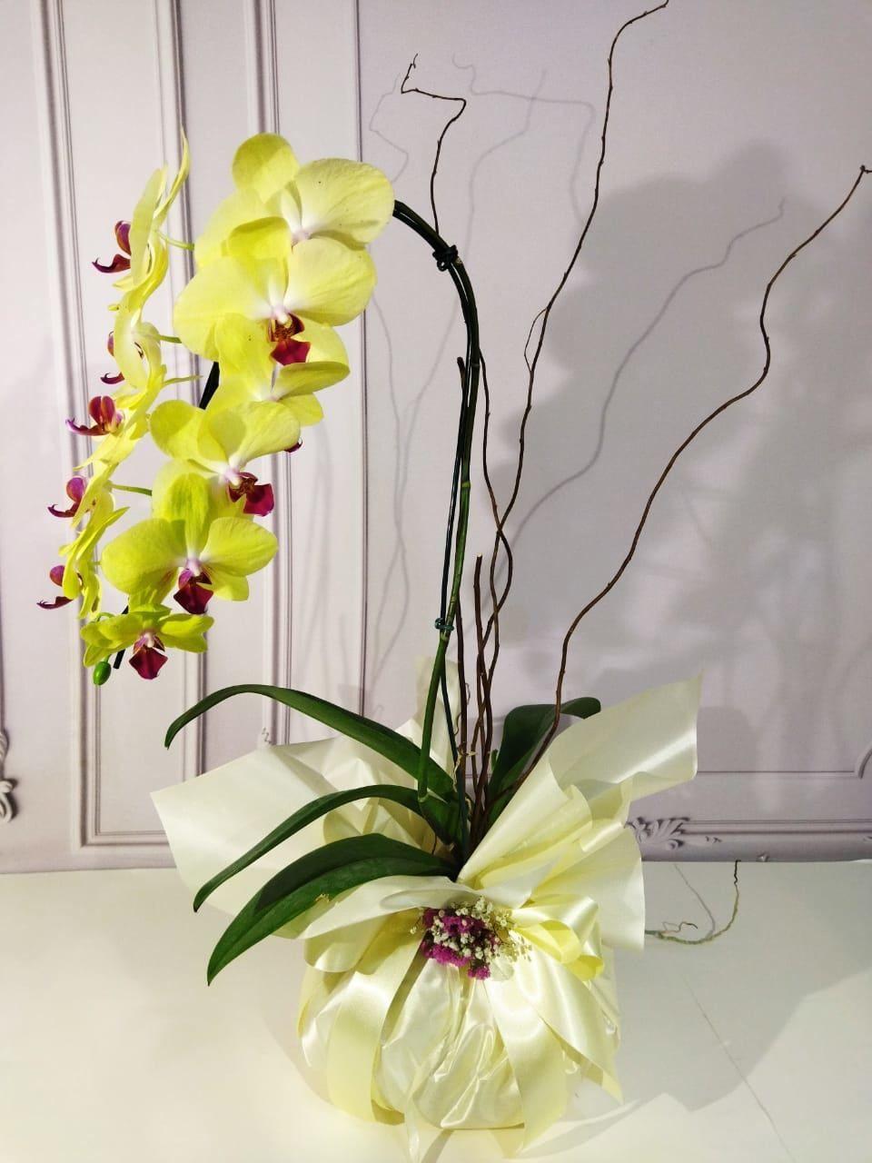 Orquídea Phalis Cascata Amarela